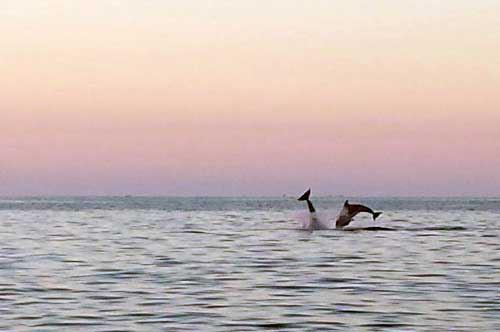 delfini-salento