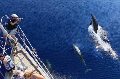 delfini-taranto