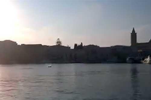 trani-delfino-porto