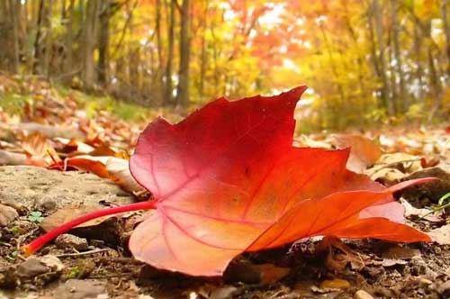 autunno-puglia