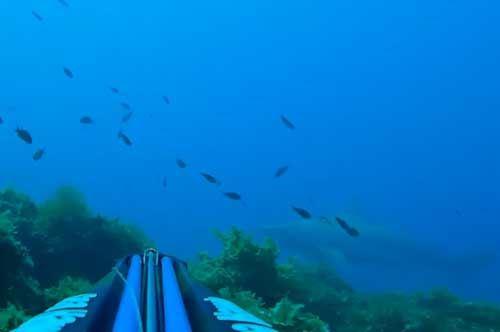 squalo-taranto